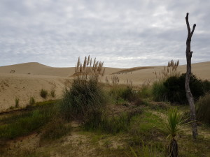 The sanddunes