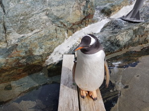 Penguin posing for some pictures (he/she was standing there a long time, not moving)